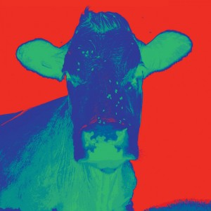 4 New Red Blue cow