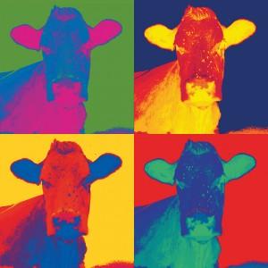 5 Multi cow